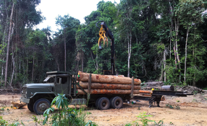 Guyanan forest operation 2