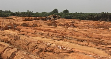 COVID-19 causing tropical timber markets crisis