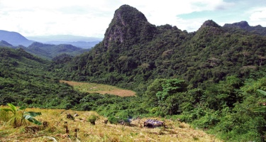 VPA helps free up Thai smallholders to sell timber