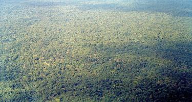 Major UK funding backs Colombian sustainable forest use